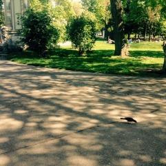 Les oiseaux de Stadtpark